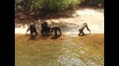 Thank God these monkeys can't swim!!